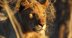 lodge. Join a ranger escorted game viewing